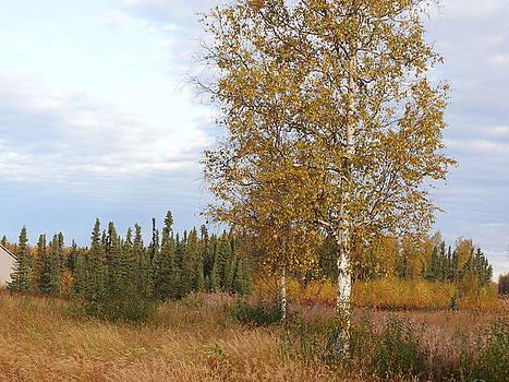 The Lone White Birch by Sherry McKellar