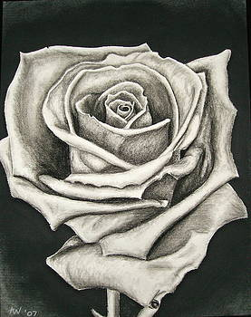 The Lonely Rose by Ashley Warbritton