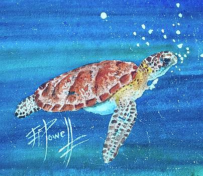The Lonely Sea Turtle by George Powell