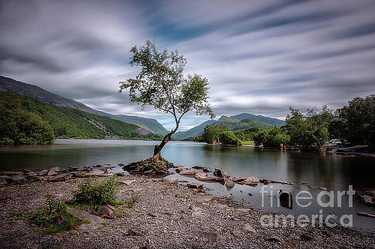 Mariusz Talarek - The lonely tree at Llyn Padarn lake - Part 1