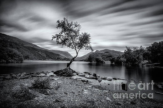 Mariusz Talarek - The lonely tree at Llyn Padarn lake - Part 2