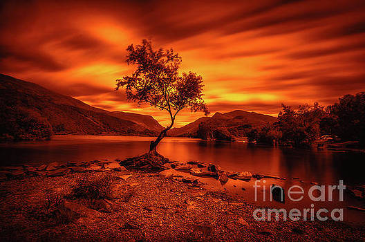 Mariusz Talarek - The lonely tree at Llyn Padarn lake - Part 3