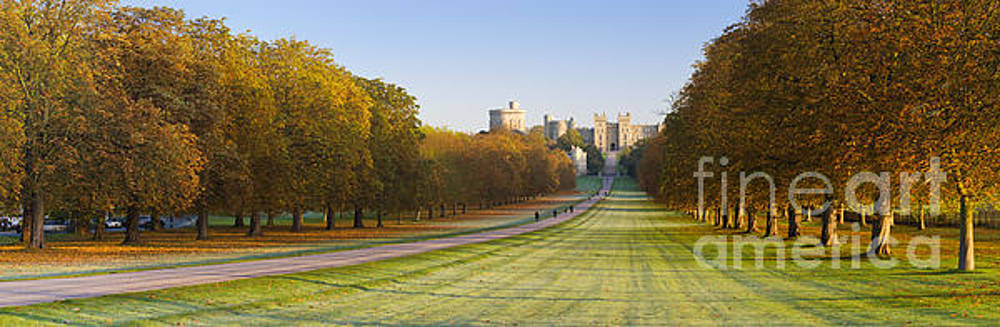 The Long Walk, Windsor Castle by Justin Foulkes