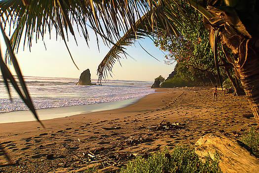 The Lost Beach by Paki O'Meara