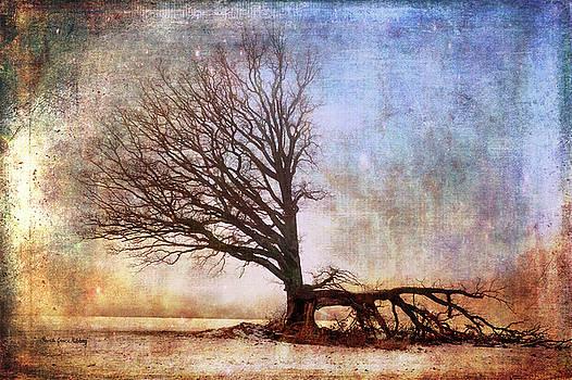 The Lost Fight by Randi Grace Nilsberg