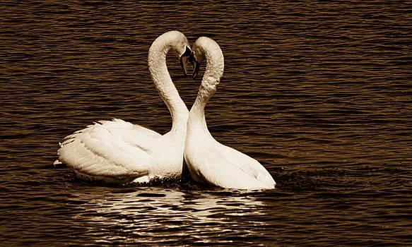 The Love Birds by Amanda Struz