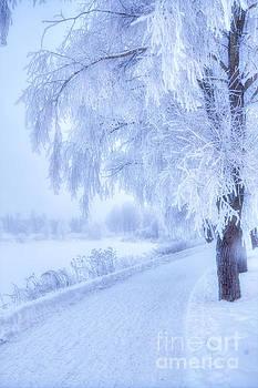 The magic of winter 5 by Veikko Suikkanen