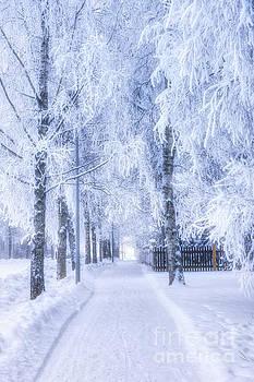 The magic of winter 6 by Veikko Suikkanen