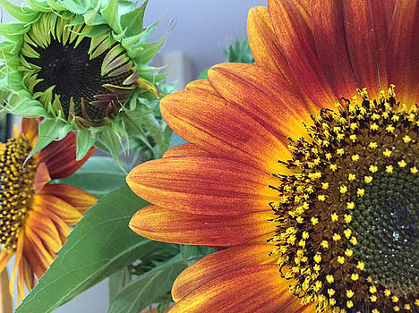 The Magic Sunflower Pollen by Dorothy Maier