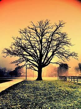 The Magic Tree by Daniel Berman