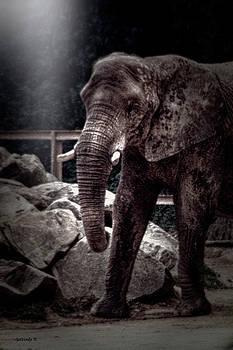 The Majestic Elephant by Gerlinde Keating - Galleria GK Keating Associates Inc