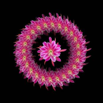 The Mandala of Pink Tropical Flower by Jacqueline Migell