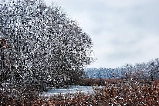 The Marsh in Winter by Patricia Gapske