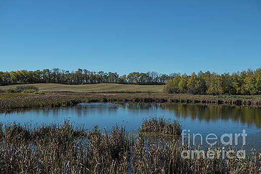 Rod Wiens - the Marsh