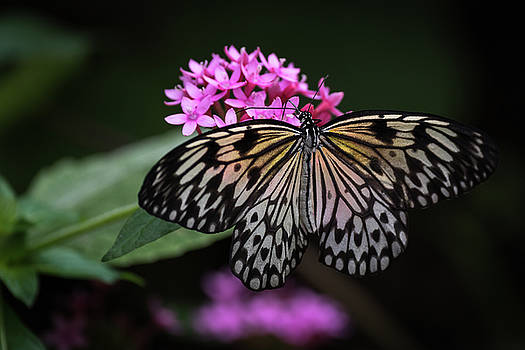 The Master Calls A Butterfly by Cindy Lark Hartman
