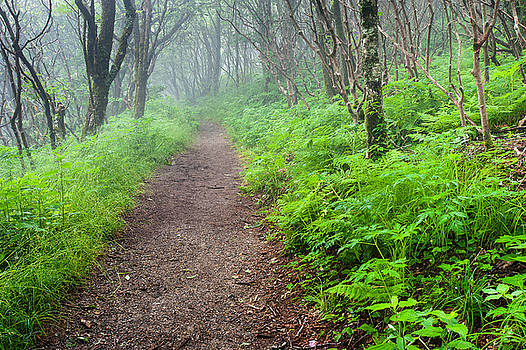 The Means - Craggy Gardens Lush Green Mountain Trail by Mark VanDyke