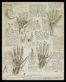 The Metacarpal by James Christopher Hill