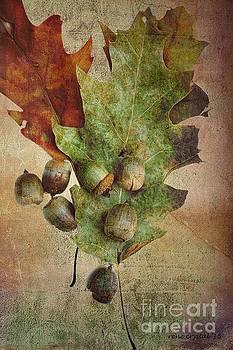 The Mighty Oak has Fallen by Rene Crystal
