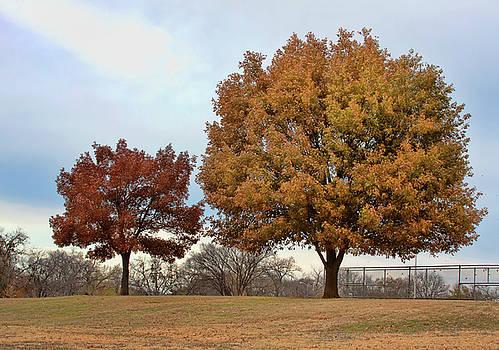 The Mighty Oak by Joan Bertucci