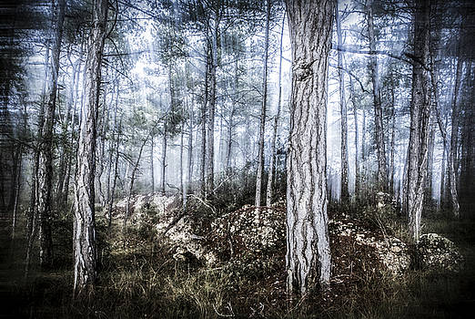 The Misty Forest by Marc Garrido