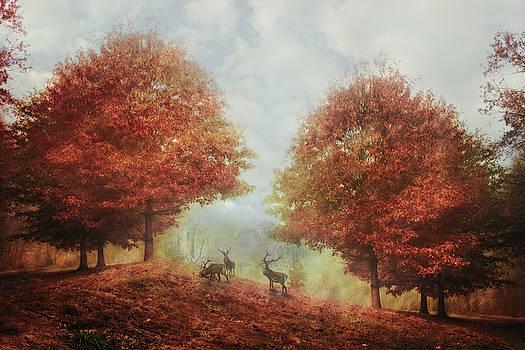 Debra and Dave Vanderlaan - The Misty Hills of Morning