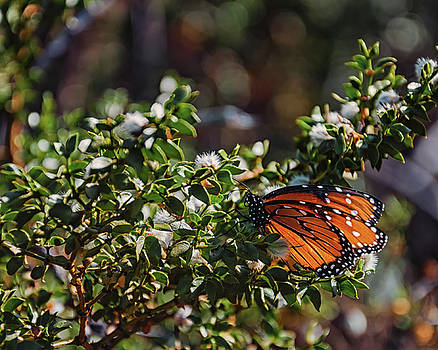 The Monarch by Daryl Clark