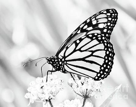The Monarch II by Anita Oakley