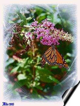 The Monarch by Mike Hazelwood