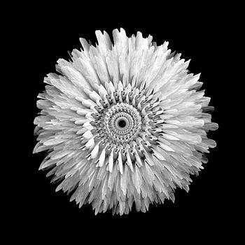 The Monochromatic Mandala of Rose by Jacqueline Migell
