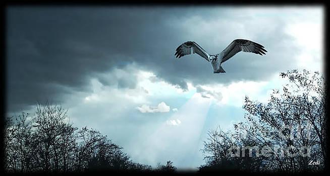 The Hawk by Zedi