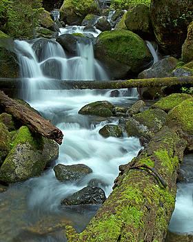 The Mountain Stream by Bob Stevens