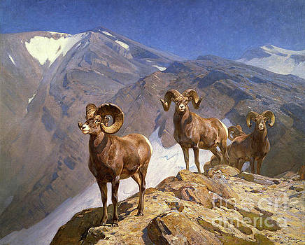 The Mountaineers by Carl Rungius