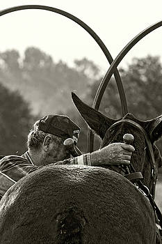 The Mule Man by Ron  McGinnis