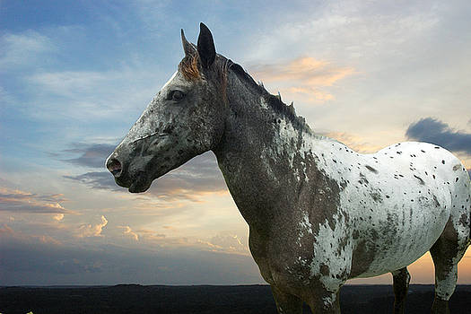Robert Anschutz - The Mustang