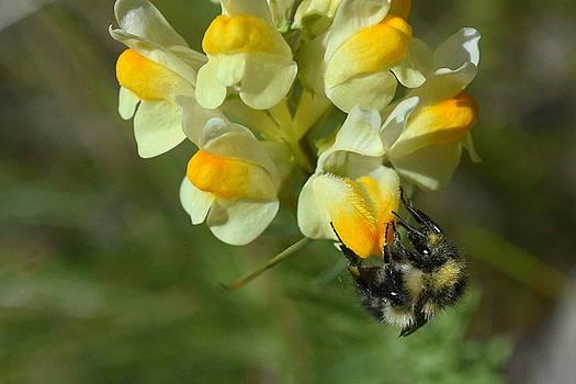 The Nectar Hunter by Sherry McKellar