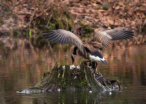 The Nest by David Johnson