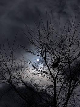 The Nest I by Anna Villarreal Garbis