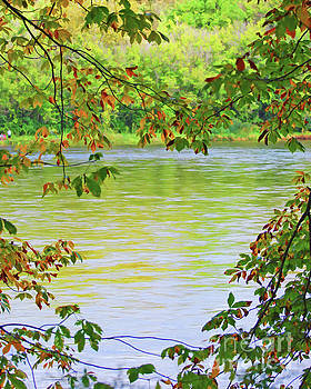 The New River and Autumn Leaves by Kerri Farley