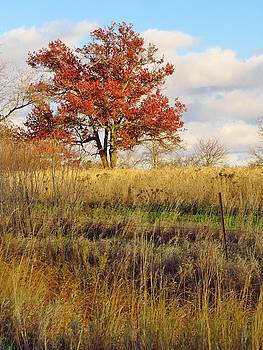 Red Oak Under November Skies by Lori Frisch