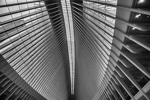 The Oculus by John Dryzga