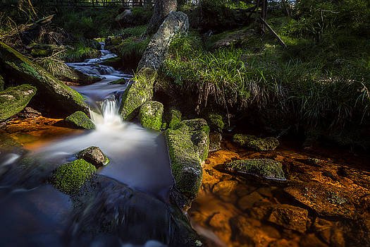 the Oder in the Harz National Park by Andreas Levi