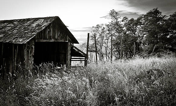The Old Shed by Trance Blackman