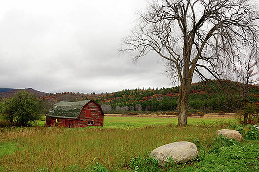 The Old Barn with Tree by Nancy De Flon
