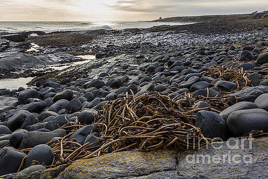 The Old Bath House from the rocks of Cullernose Point. by John Cox