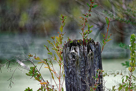 The Old Fence Post by Paul Mashburn