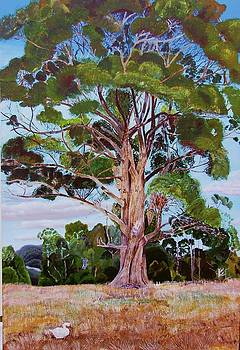 The Old Gum Tree by Joan Cookson