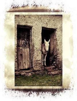 The Old Mule by Joe Cashin