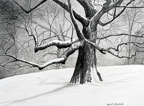 The Old Tree by Bob Crawford