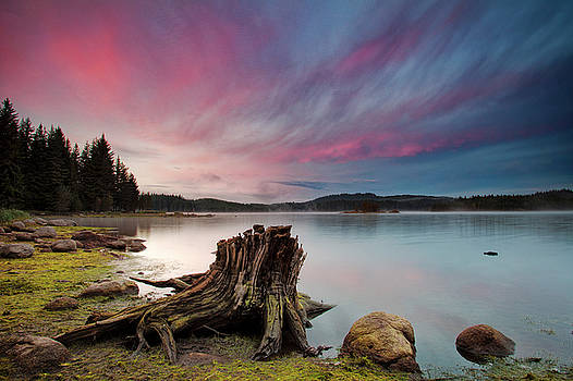 The Old trunk by Evgeni Dinev