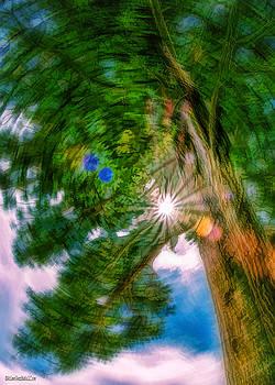 LeeAnn McLaneGoetz McLaneGoetzStudioLLCcom - The Old Veteran Jeffrey Pine